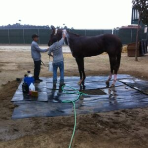 Bath time at Del Mar Racetrack.