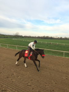 Trainers galloping the horses they have in training can be an asset to their business. They can save money and learn more about the horse.