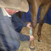 Thoroughbred Racehorse Trainer