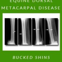 Equine Dorsal Metacarpal Disease — Bucked Shins