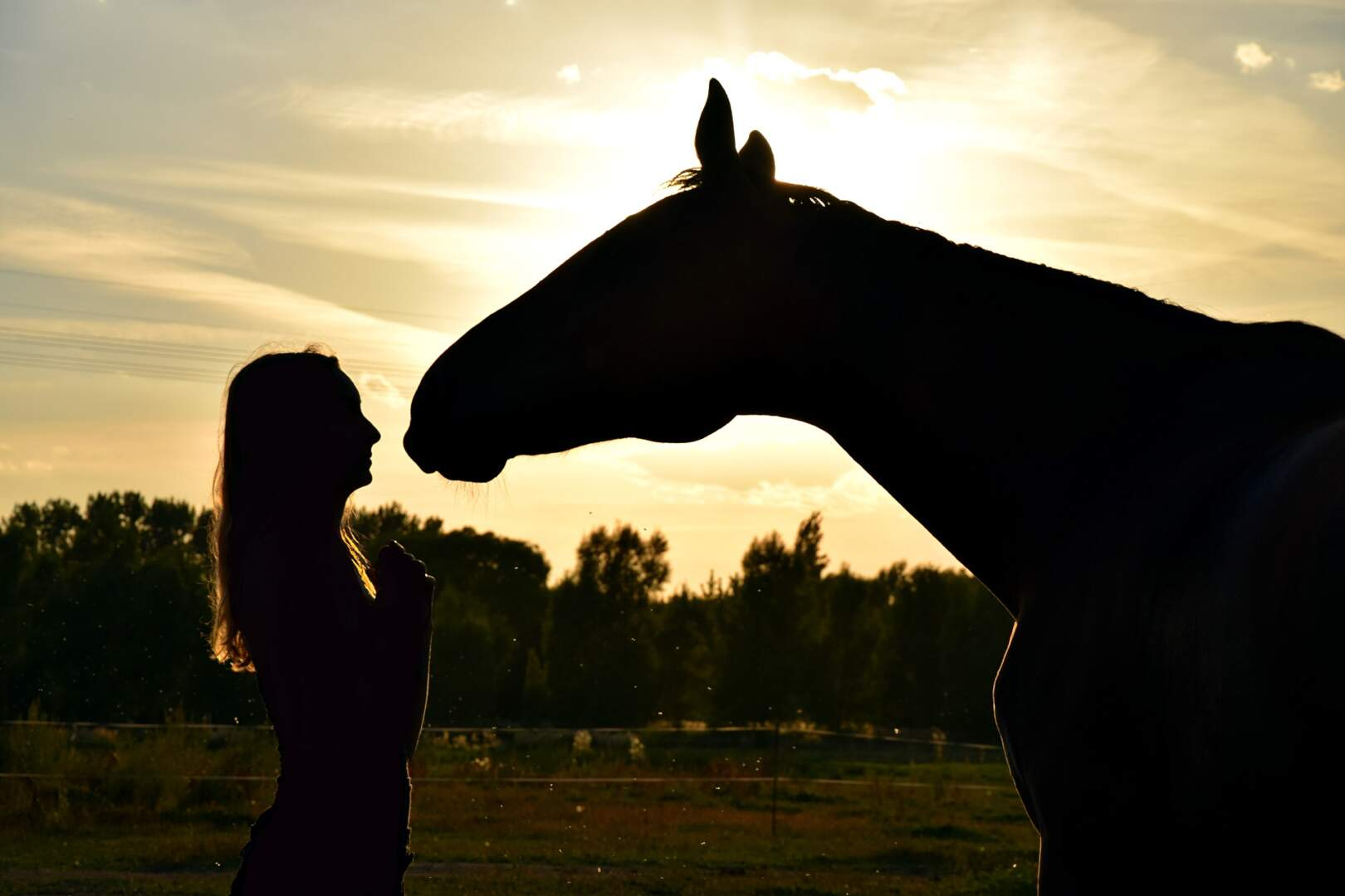 Horse and Owner at sunset