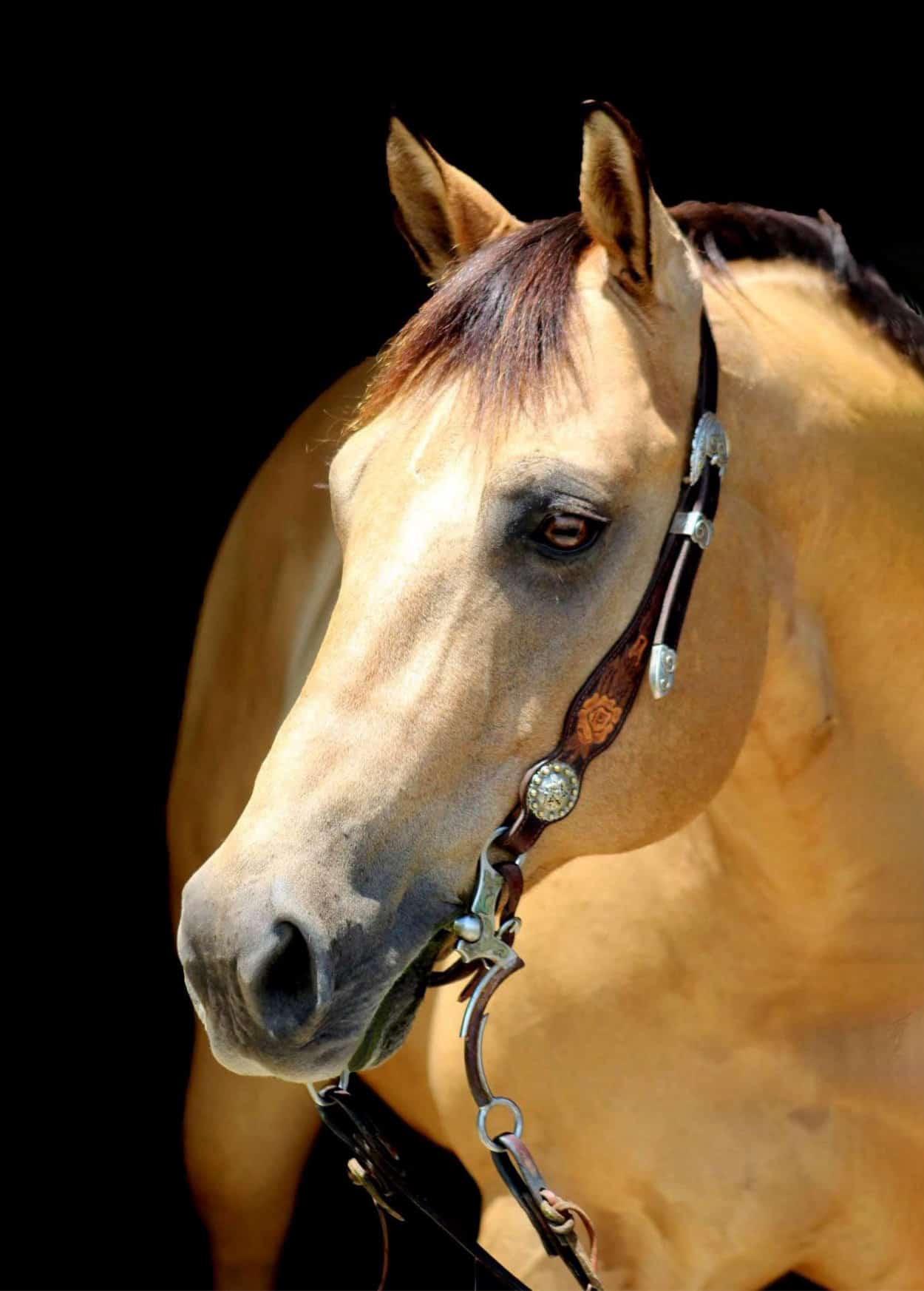 Horse Bentley